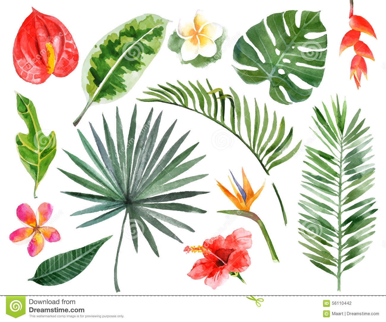 Hand Drawn Watercolor Tropical Plants Stock Vector.