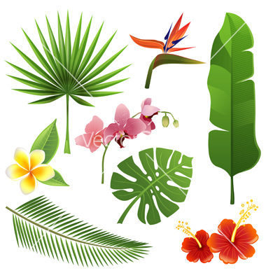 Tropical plants vector by mart_m.