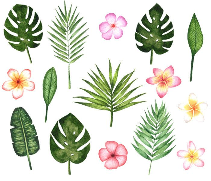 Tropical Watercolor Clipart,Summer Watercolor Clipart.