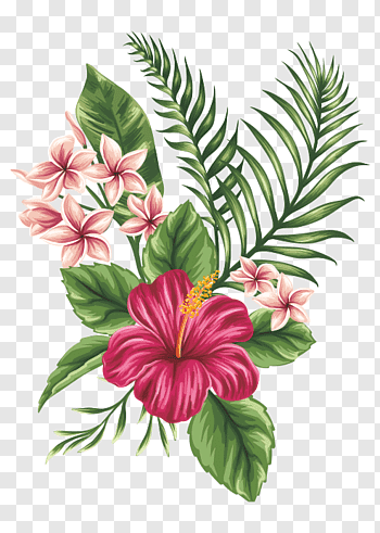 Red hibiscus illustration, Tropics Tropical climate Flower.