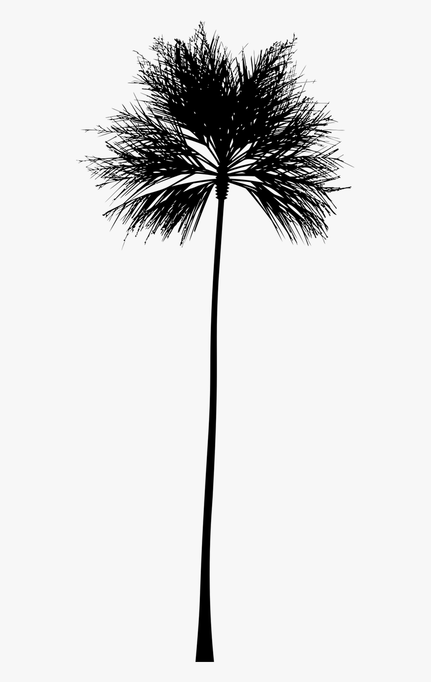 Transparent Tropical Clipart Black And White.