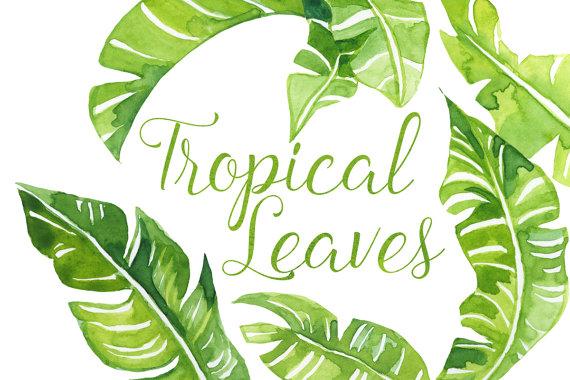 Watercolor Tropical palm Leaves Clip Art Tropics clipart.