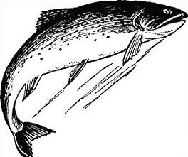 Free Trout Clipart.