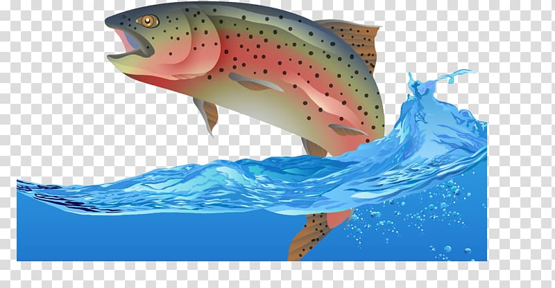 Rainbow trout Fish Euclidean , Fly fish transparent.