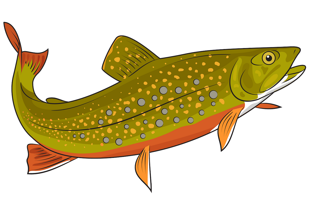 Brook Trout clipart. Free download..