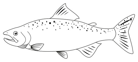 Trout Outline photos, royalty.