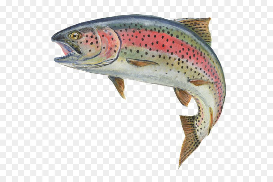 Rainbow Trout Png & Free Rainbow Trout.png Transparent.