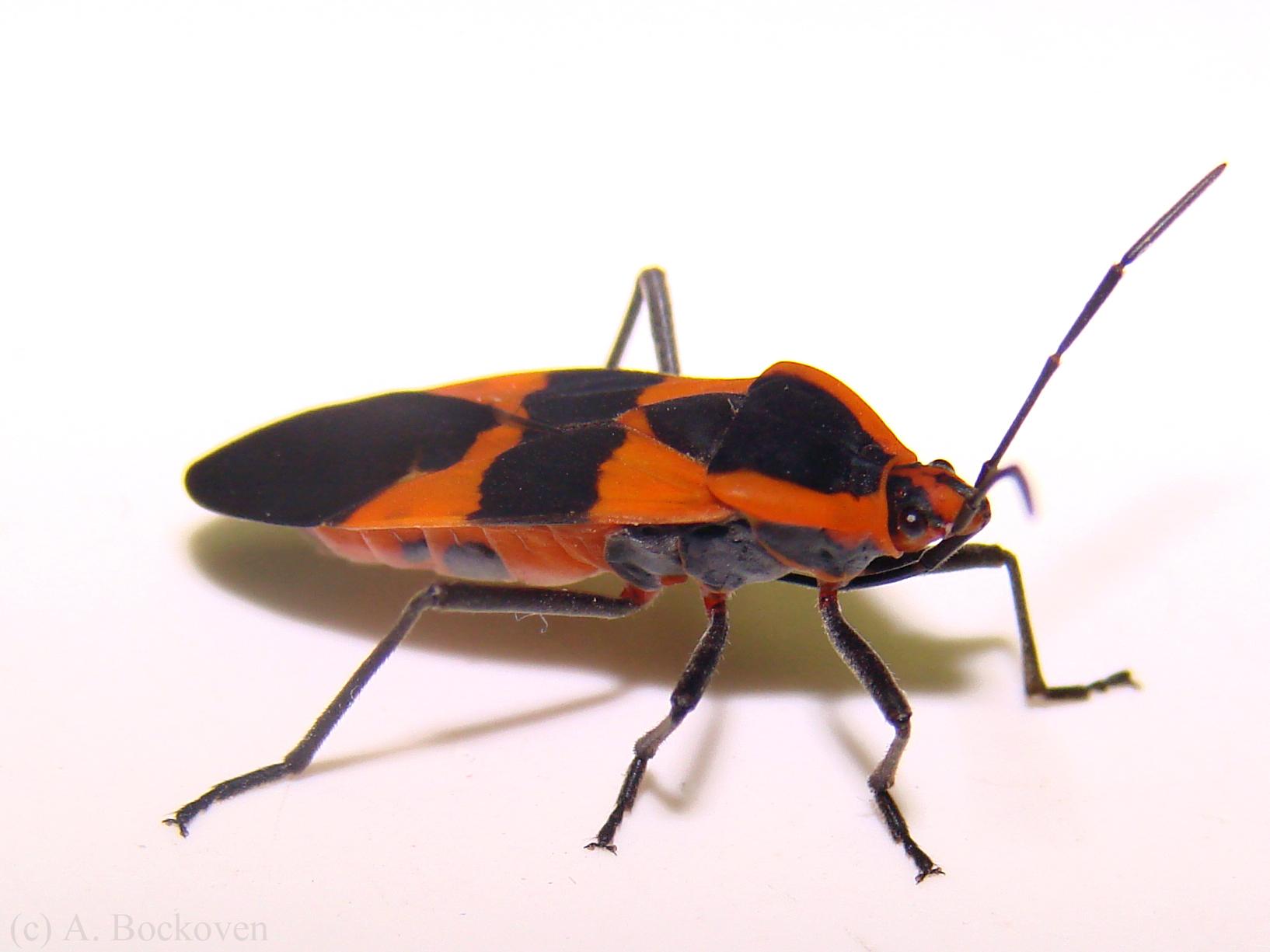 True bugs clipart #12