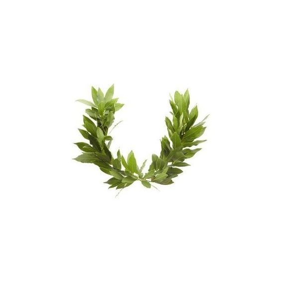 Make a Laurel Wreath for Children Olympics using two real bay leaf.
