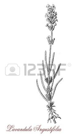 0 Common Flowers Stock Vector Illustration And Royalty Free Common.