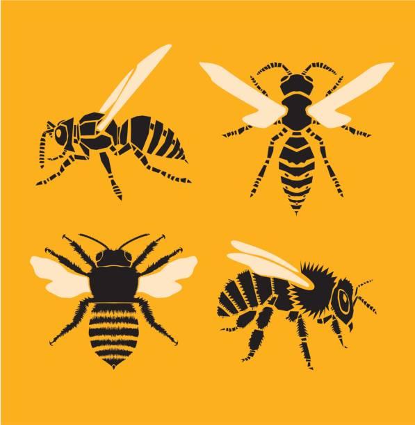 Wasp Clip Art, Vector Images & Illustrations.