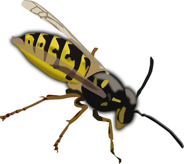 Wasp Facts for Kids.