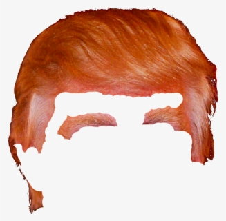 Free Trump Clip Art with No Background.