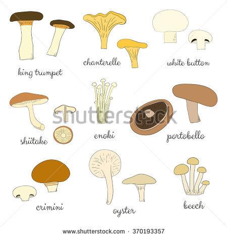 Chanterelle Mushroom Stock Vectors & Vector Clip Art.