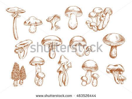 Chanterelle Stock Vectors, Images & Vector Art.