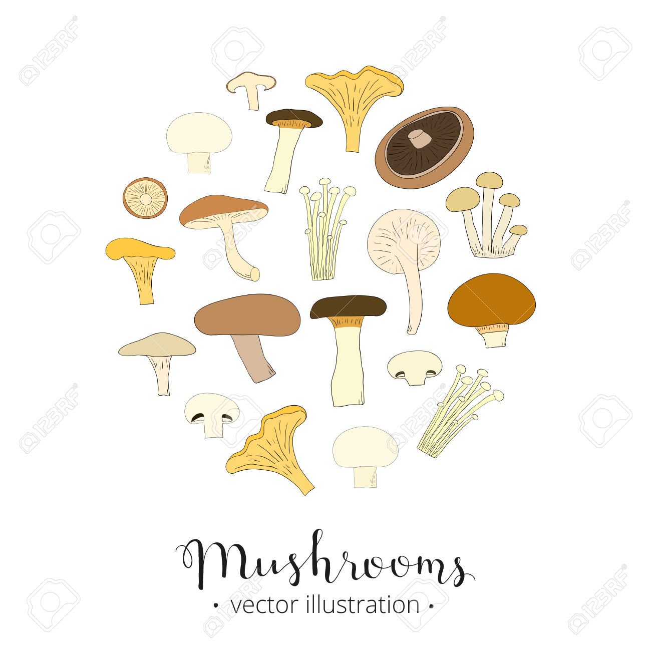 Different Hand Drawn Mushrooms Composed In Circle Shape. King.