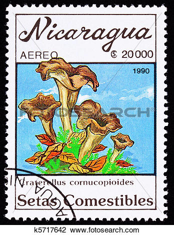 Clip Art of Edible Black Chanterelle mushroom, Craterellus.