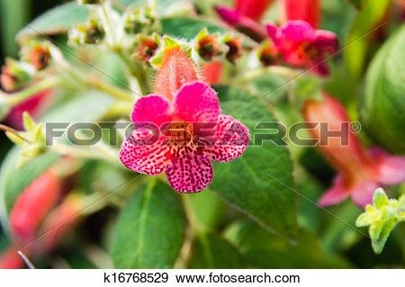 Stock Photograph of Trumpet shaped flower k16768529.