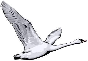 Similiar Trumpeter Swan Clip Art Keywords.