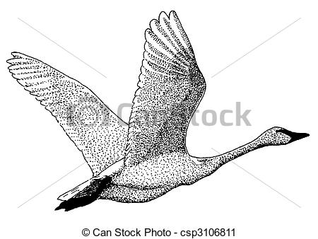 Clipart of Trumpeter Swan.
