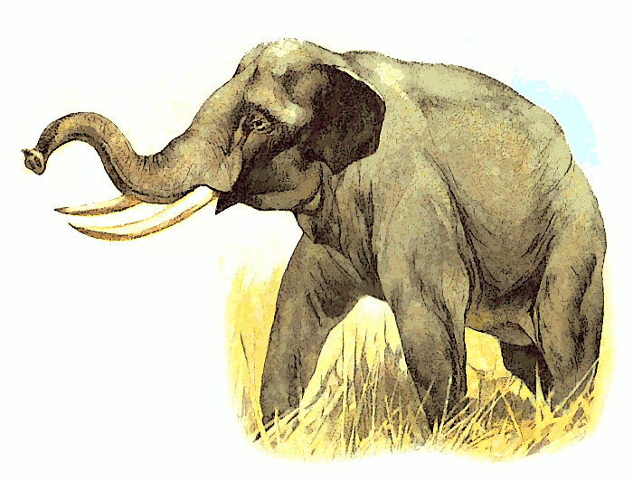 Free Trumpeting Elephant Clipart, 1 page of Public Domain Clip Art.