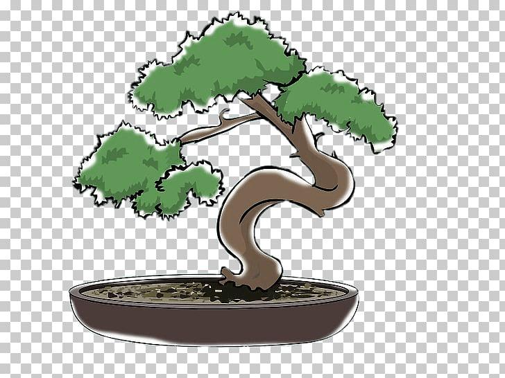 Indoor bonsai Pruning Beautiful Bonsai Tree, tree PNG.