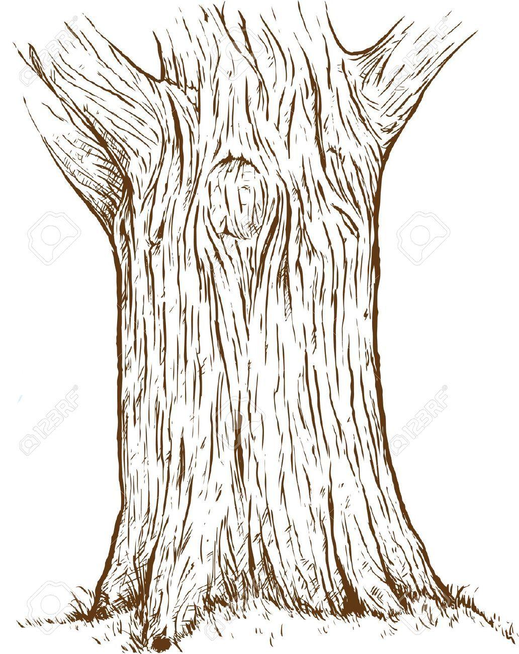 tree trunk drawing.