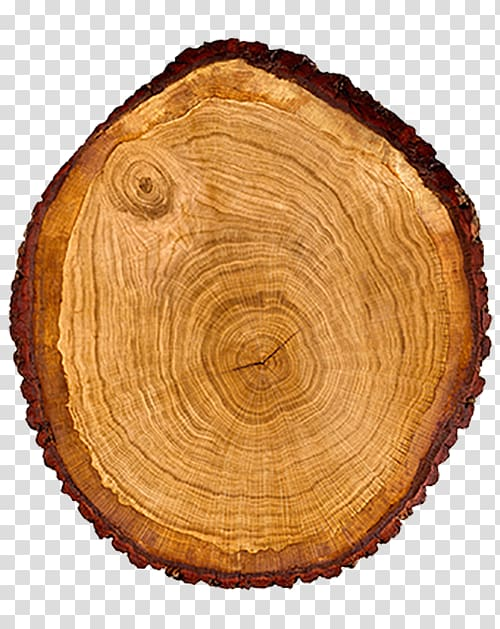 Round brown log, Tree Wood Trunk Cross section.