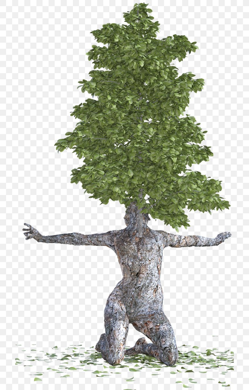 Spruce Trunk Bark Tree Wood, PNG, 720x1280px, Spruce, Bark.