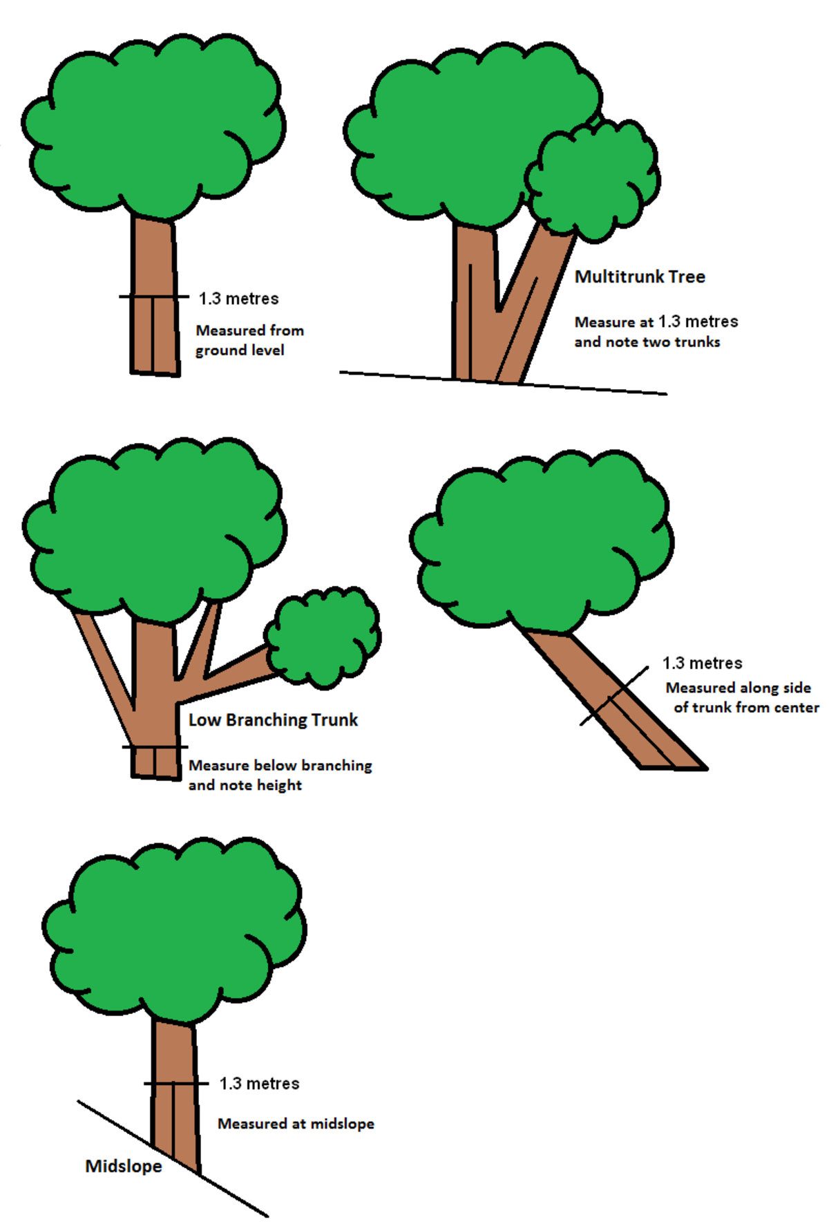 Tree girth measurement.