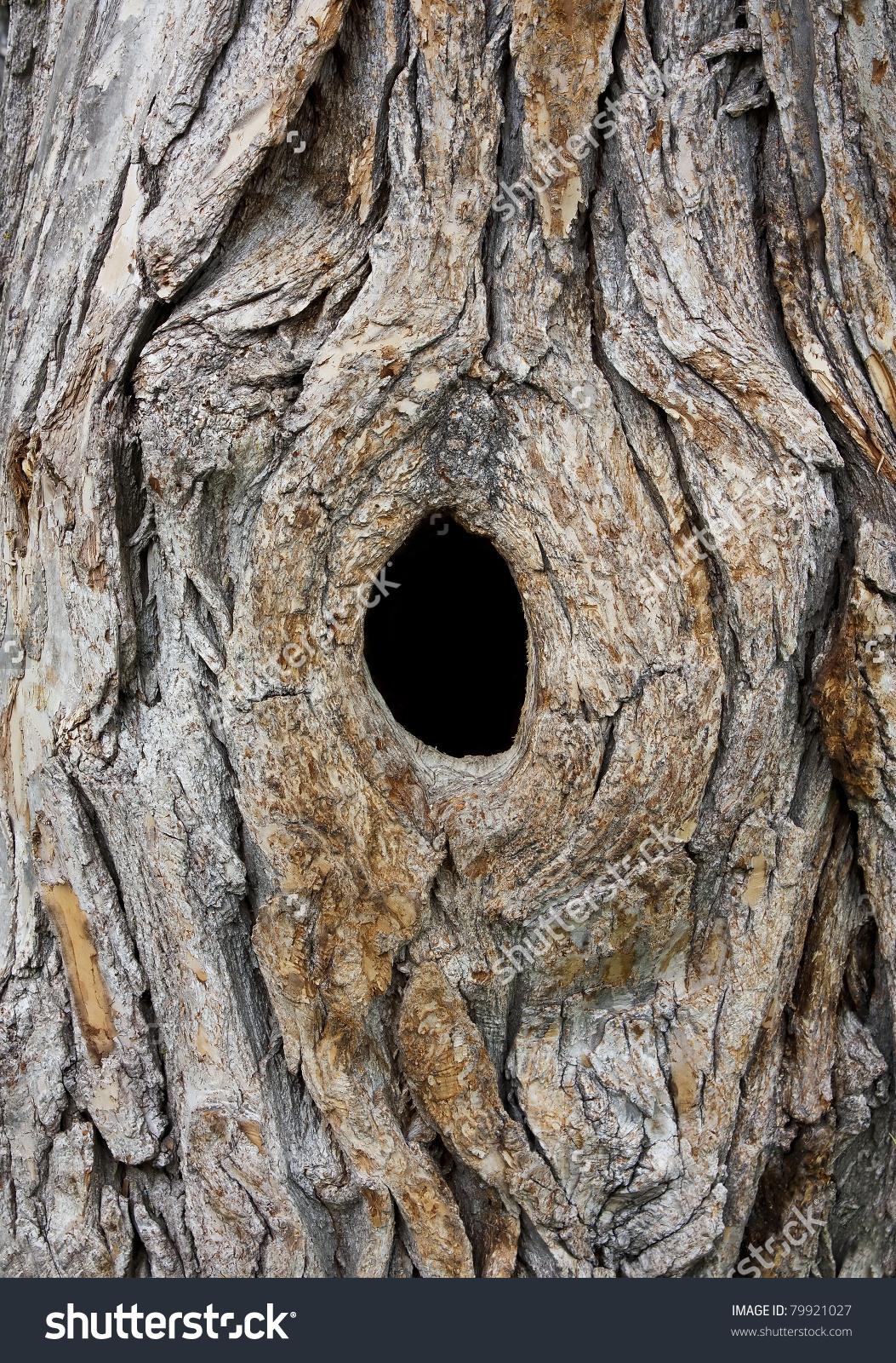 Hole Tree Trunk Bird Nest Stock Photo 79921027.