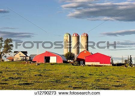Stock Photo of Dairy farm, Truro, Nova Scotia, Canada u12790273.