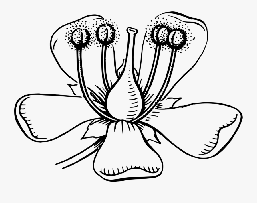 Symmetry,monochrome Photography,petal.