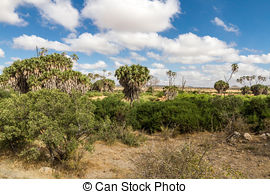 Stock Photographs of Jungle, bush trees background in Africa.