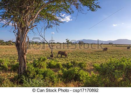 Stock Photographs of Savana landscape in Africa. Tsavo West, Kenya.