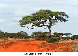 Stock Images of Red ground road, bush with savanna. Tsavo West.