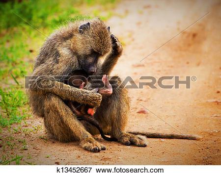 Picture of Baboon monkeys in African bush. Tsavo West, Kenya.