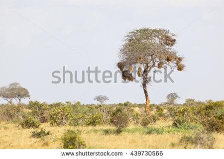 Tsavo East National Park Stock Photos, Royalty.