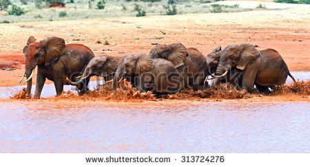"tsavo National Park"" Stock Photos, Royalty."