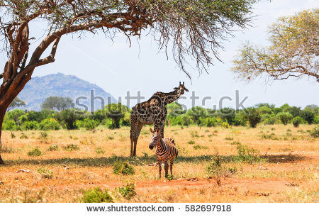 Tsavo Stock Images, Royalty.