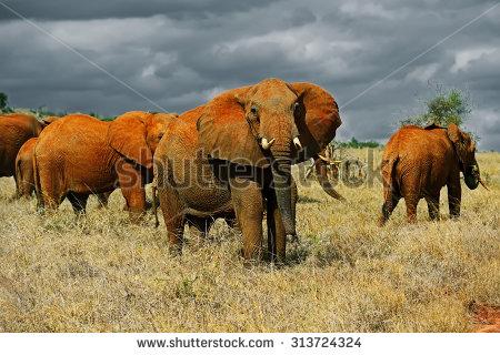 Tsavo National Park Stock Images, Royalty.