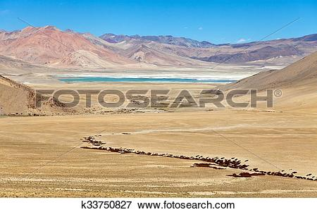 Picture of Lake Kar or Tso Kar near Tso Moriri lake, Rupshu valley.