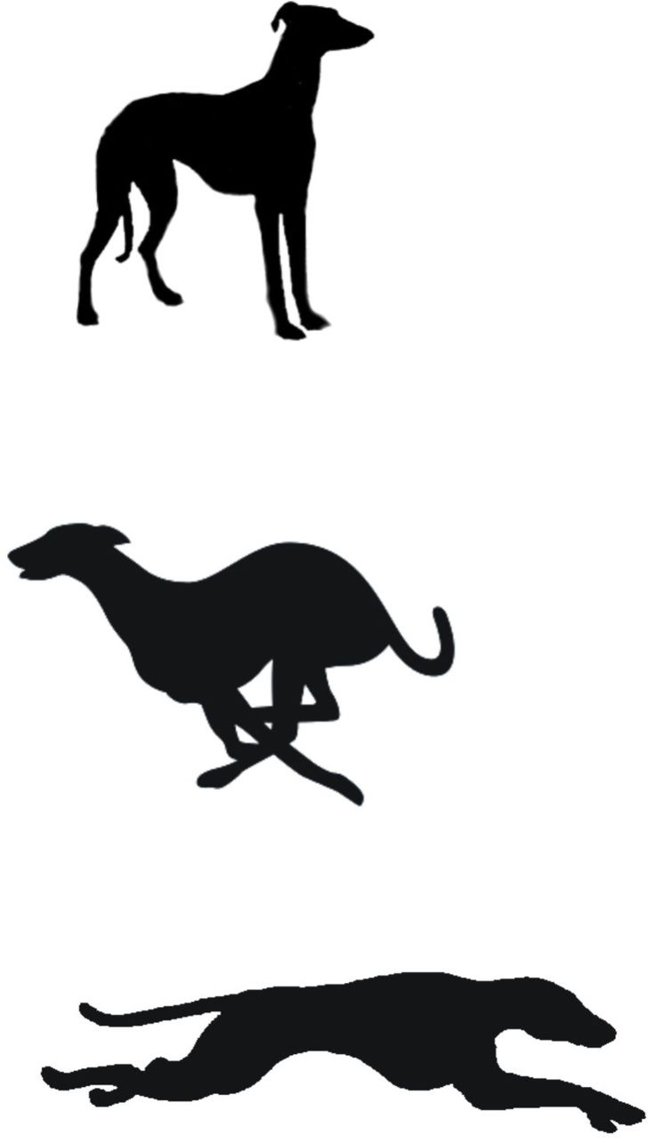 17 Best images about Greyhound on Pinterest.