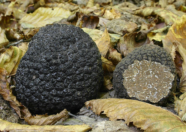Black Summer Truffle.