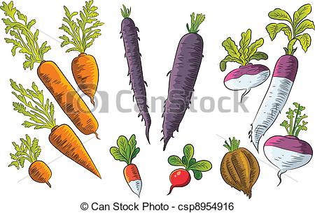 Clip Art Vector of Tuber Collection.