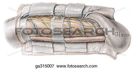 Tubular Illustrations and Clipart. 351 tubular royalty free.