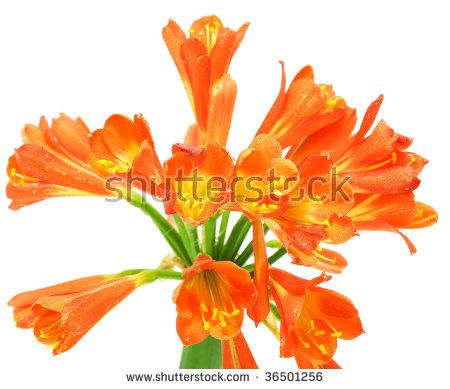 Tubular Flowers Banco de imágenes. Fotos y vectores libres de.