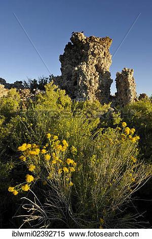 "Stock Image of ""Tufa Rocks, calc."