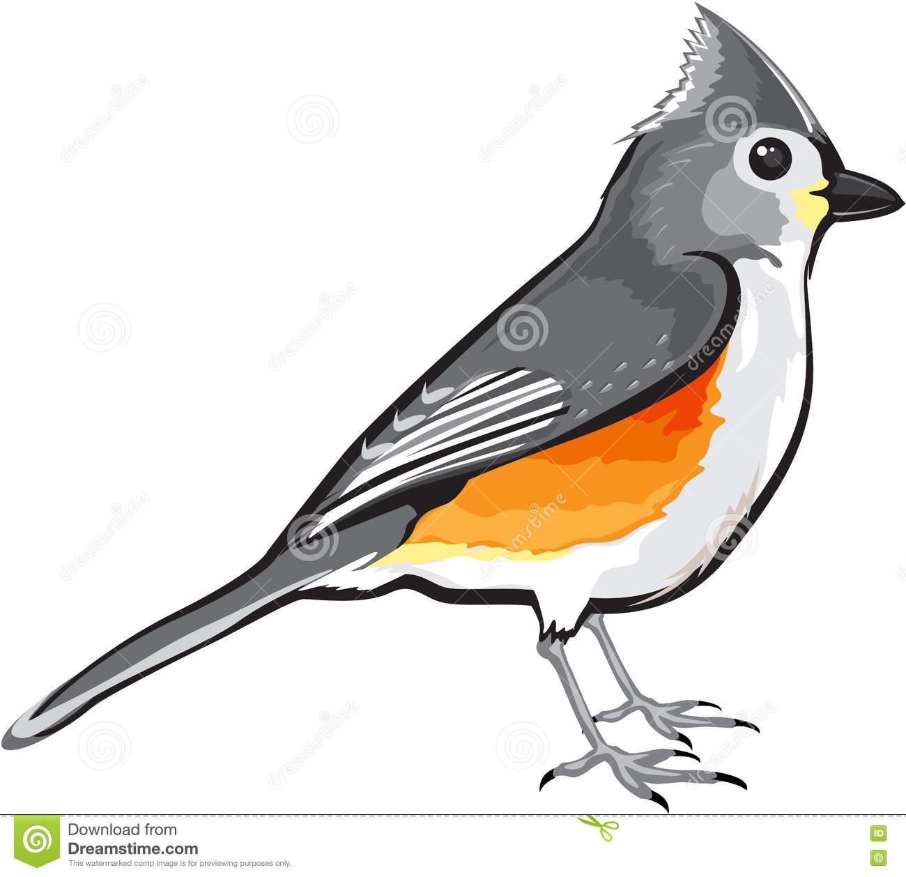 Tufted Titmouse Bird Vector Illustration Clip.
