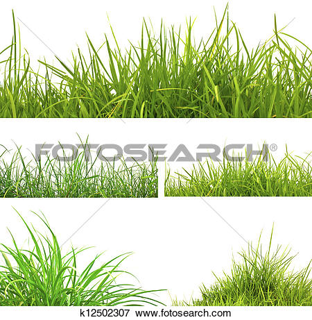 Picture of 3 backgrounds of fresh spring green grass and 2 tufts.